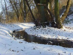 Winter09-SNV32797.jpg