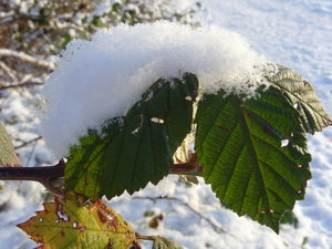 Winter09-SNV32807.jpg