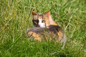 Katze-IMG02096.jpg