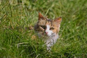 Katze-IMG02097.jpg