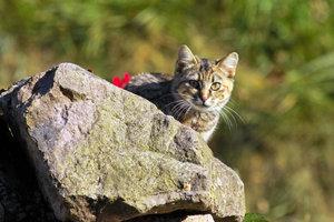 Katze-IMG02169.jpg