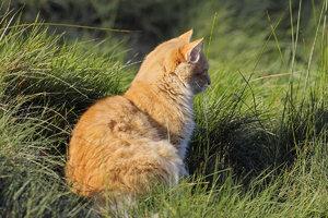 Katze-IMG02310.jpg