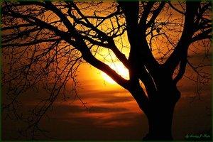 Abend Sonne.jpg