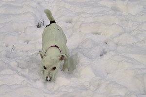 Hund-SD10 - IMG5498.jpg