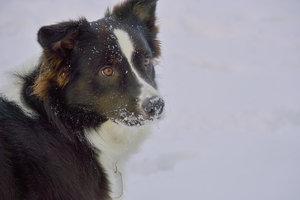 Hund-SD14 - SDIM3330.jpg