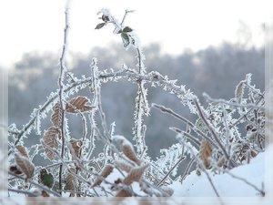 Bilderforum Winter 08 01 2009 mit Sammy P1110564(c) PPf.jpg