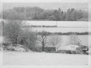 Bilderforum Winter 08 01 2009 mit Sammy P1110571 flashback(c) PPf.jpg