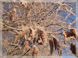 Bilderforum Winter 08 01 2009 mit Sammy P1110596(c) PPf.jpg