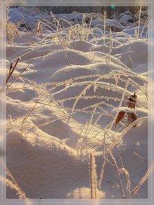 Bilderforum Winter 08 01 2009 mit Sammy P1110602(c) PPf.jpg