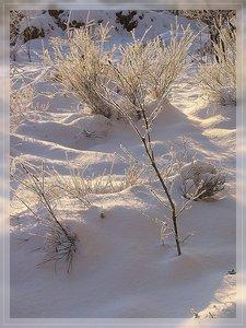 Bilderforum Winter 08 01 2009 mit Sammy P1110603(c) PPf.jpg