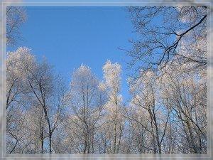 Bilderforum Winter 08 01 2009 mit Sammy P1110636(c) PPf.jpg