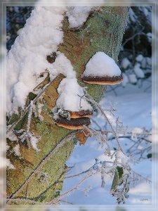 Bilderforum Winter 08 01 2009 mit Sammy P1110648(c) PPf.jpg