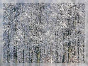 Bilderforum Winter 08 01 2009 mit Sammy P1110691(c) PPf.jpg