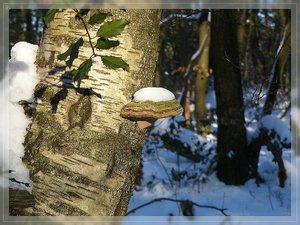 Bilderforum Winter 08 01 2009 mit Sammy P1110767(c) PPf.jpg