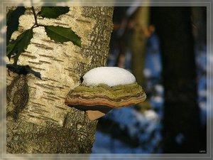 Bilderforum Winter 08 01 2009 mit Sammy P1110769(c) PPf.jpg