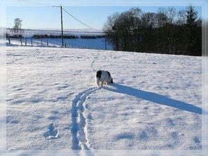 Bilderforum Winter 08 01 2009 mit Sammy P1110812(c) PPf.jpg
