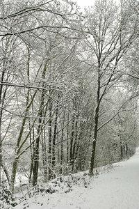 Winter-SD14 - SDIM3384.jpg