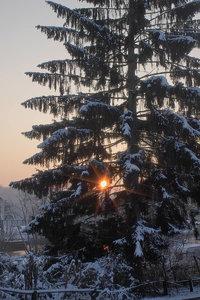 Winter-SD10 - IMG05515.jpg