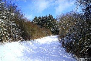 Schnee_3.jpg