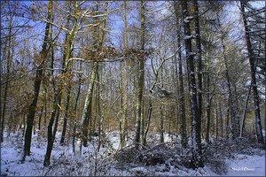 Schnee_4.jpg