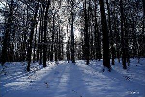 Schnee_7.jpg