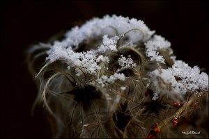 Schnee_14.jpg