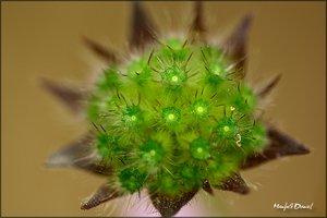 Wer kennt die Pflanze_Macro.jpg