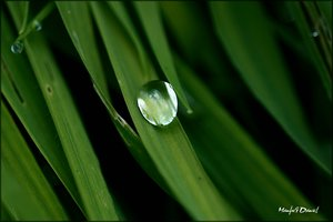 Wassertropfen_Macro.jpg