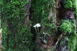 Wald 180.jpg