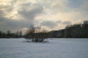Pott_Winter_DP1 - SDIM1374.jpg