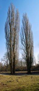 Baum-Pano_Baum_Pano.jpg