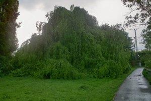 Baum-_SDIM0180.jpg