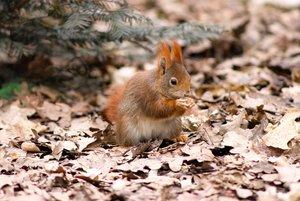 eichhörnchen1.jpg