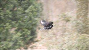 vogel1.jpg