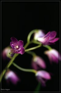 comp__MG_0103 Kopie.jpg