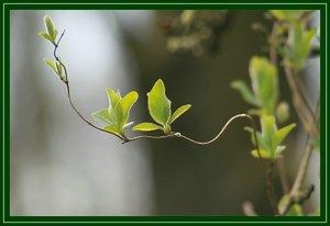 Farben des Waldes SDIM5704 (c) PPf.jpg
