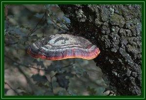 Farben des Waldes SDIM5707_filtered (c) PPf.jpg