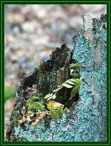 Farben des Waldes SDIM5711_filtered (c) PPf.jpg