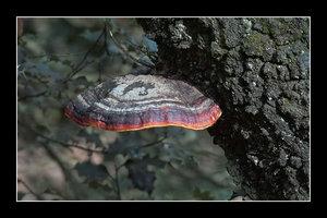 Farben des Waldes SDIM5707_filtered (c) PPf_hf-1 Kopie.jpg