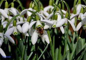 Bienenvolk bei der Arbeit_bearbeitet-1.jpg