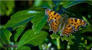 comp_Schmetterling2.jpg