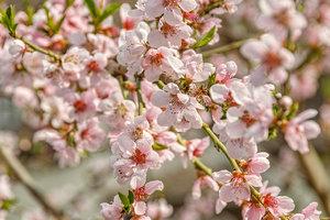 Blüte1.jpg