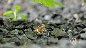 1407-frosch-3.jpg