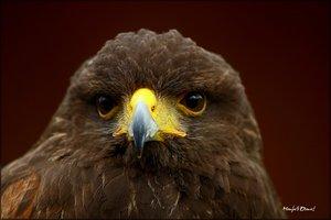 Adler_1.jpg