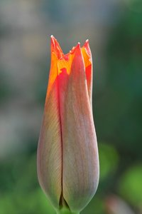 Blumen-SD10 - IMG05689.jpg