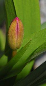 Blumen-SD10 - IMG06623_2.jpg