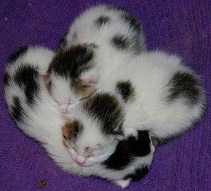 Katzenkinder4.jpg