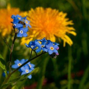 Blau und Gelb