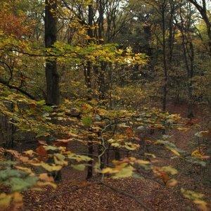 Im Wald, Venlo