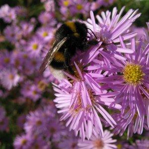 Honiglieferant